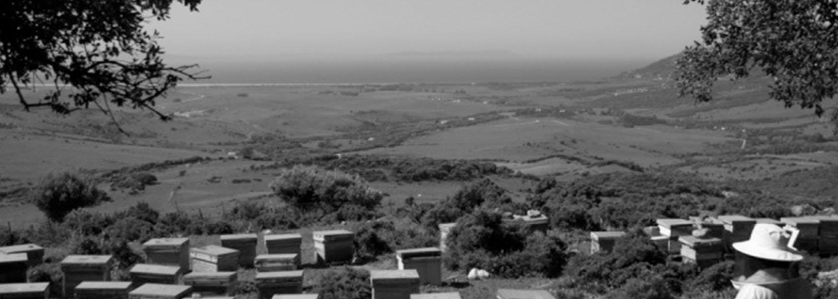 primeros asentamientos de Bee Tarifa